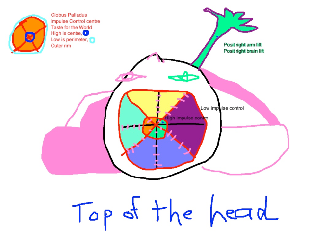 top of the head