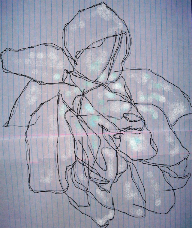 amaryllis 2 fri.dec.14,2012